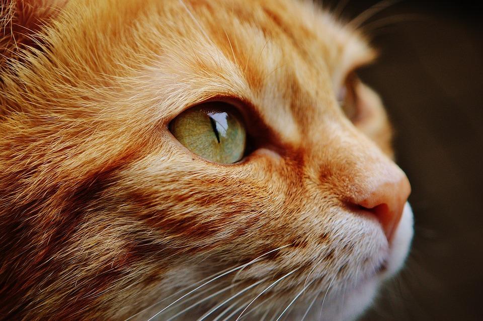 cat-1455468_960_720